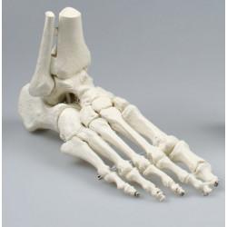 Erler-Zimmer model stopy z...