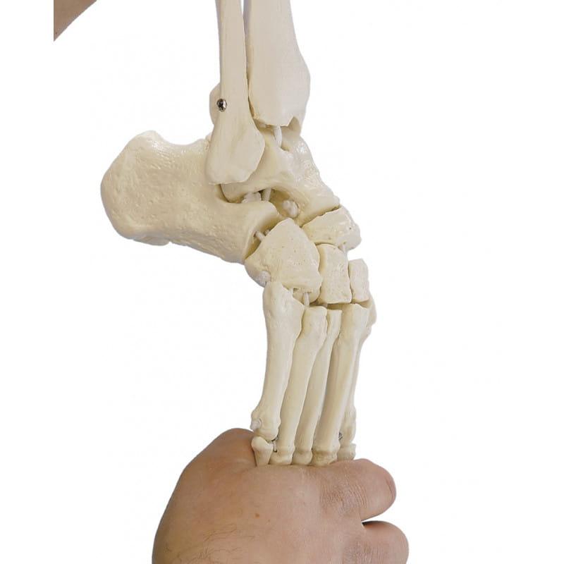 Erler-Zimmer model elastycznej stopy z fragmentami kości podudzia