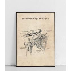 Plakat anatomiczny...