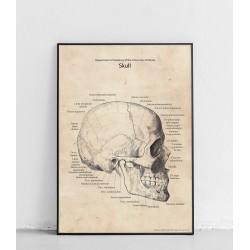"""Plakat anatomiczny """"Czaszka..."""